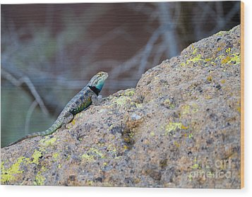 Desert Spiny Lizard Wood Print by Martha Marks
