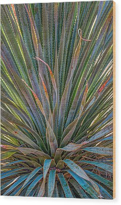 Desert Spoon Wood Print by Beverly Parks