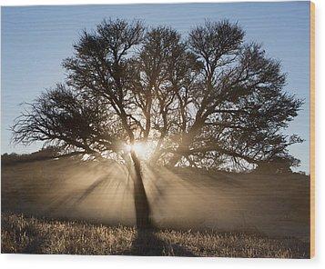 Desert Tree Wood Print by Max Waugh
