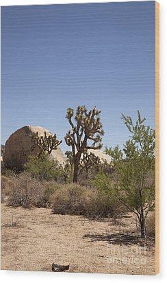 Desert Trees Wood Print by Amanda Barcon