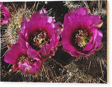Wood Print featuring the photograph Desert Wildflower by Diane Lent