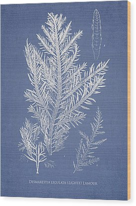 Desmarestia Ligulata Wood Print by Aged Pixel