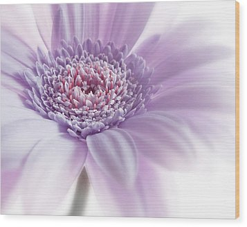Close Up White Pink Flowers Macro Photography Art Wood Print by Artecco Fine Art Photography