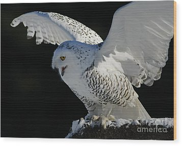 Destiny's Journey - Snowy Owl Wood Print by Inspired Nature Photography Fine Art Photography
