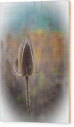 Dew And Thistle Wood Print