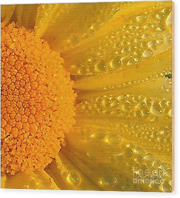 Wood Print featuring the photograph Dew Drops On Daisy by Terri Gostola