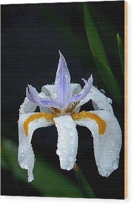 Dew Drops Wood Print by Sandra Sengstock-Miller