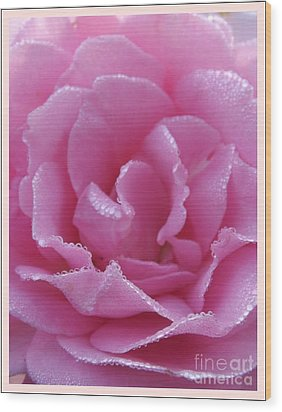 Dew Kissed Rose Wood Print by Sara  Raber