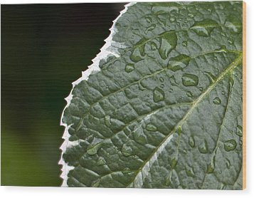 Dew On Leaf Wood Print by Crystal Hoeveler