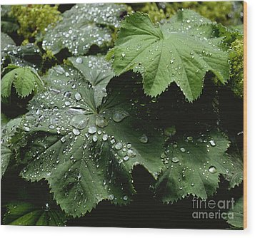 Wood Print featuring the photograph Dew On Leaves 2 by Tom Brickhouse