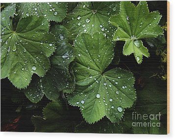 Wood Print featuring the photograph Dew On Leaves by Tom Brickhouse