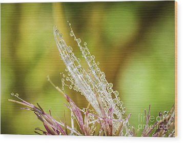 Dew On The Thistle Wood Print by Mitch Shindelbower