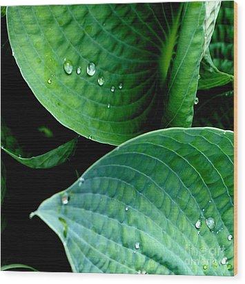 Dew Wood Print by Valerie Fuqua