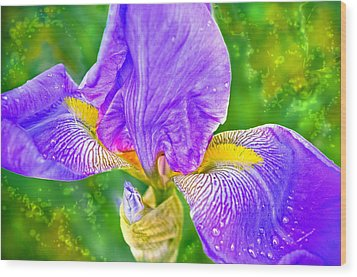 Wood Print featuring the photograph Dewey Iris by Adria Trail