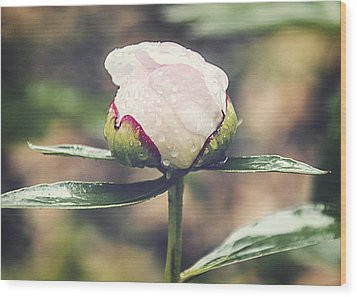 Dewy Bloom Wood Print