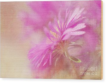 Dewy Pink Asters Wood Print by Lois Bryan