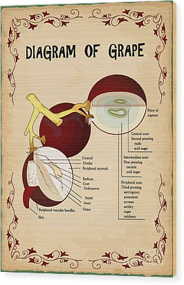 Diagram Of Grape Wood Print by Indian Summer