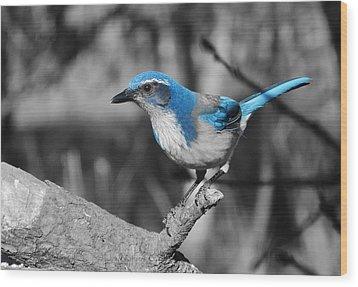 Dial Blue Wood Print by VLee Watson