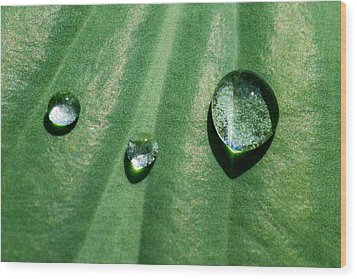 Diamonds Are Forever - Featured 3 Wood Print by Alexander Senin