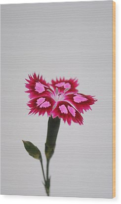 Dianthus Still Life Wood Print by Robert  Moss