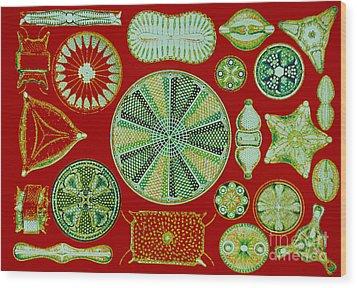 Diatoms-ernst Haeckel Wood Print by Scott Camazine