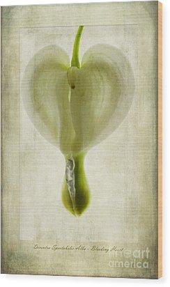 Dicentra Spectabilis Alba Wood Print by John Edwards
