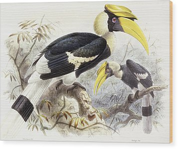 Dichocerus Bicornis Wood Print by Johan Gerard Keulemans