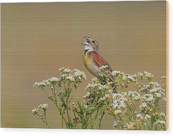 Dickcissel On Wild Daisies Wood Print by Daniel Behm