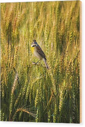 Dickcissel Posing On Wheat Head Wood Print