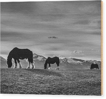 Dick's Horses Wood Print by Dianne Arrigoni