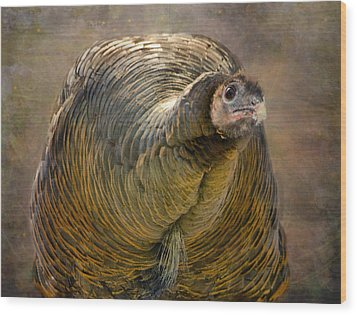 Did I Miss Thanksgiving?  Wood Print by Betty  Pauwels
