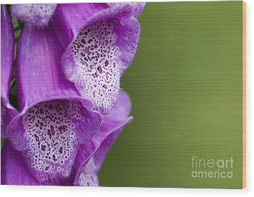 Digitalis Abstract Wood Print by Anne Gilbert