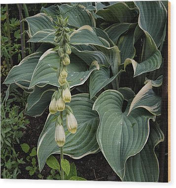 Wood Print featuring the photograph Digitalis by Leif Sohlman