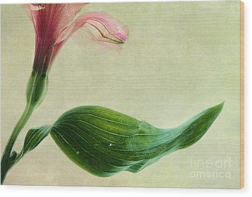 dim colours II Wood Print by Priska Wettstein