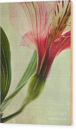 Dim Colours Wood Print by Priska Wettstein