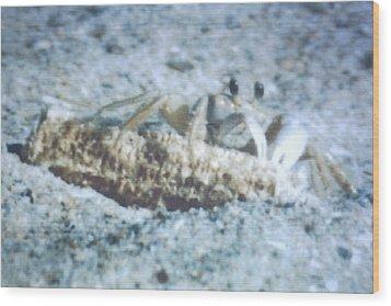 Beach Crab Snacking Wood Print by Belinda Lee