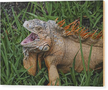 Wood Print featuring the photograph Dinosaur by Phil Abrams