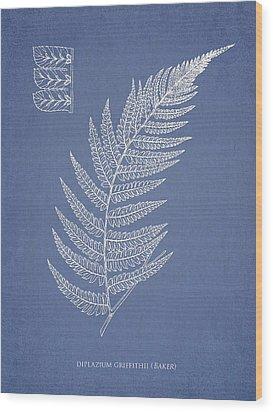 Diplazium Griffithii Wood Print by Aged Pixel