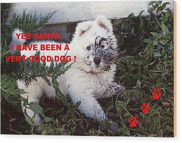 Dirty Dog Christmas Card Wood Print