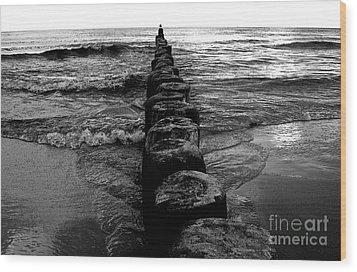 Distant Seagull Baltic Beach Wood Print