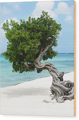 Divi Divi Tree In Aruba Wood Print by DejaVu Designs
