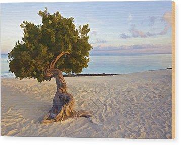 Divi Divi Tree Of Aruba Wood Print by David Letts