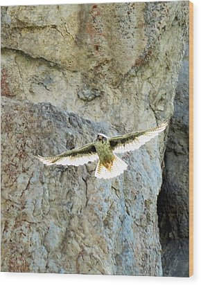 Diving Falcon Wood Print
