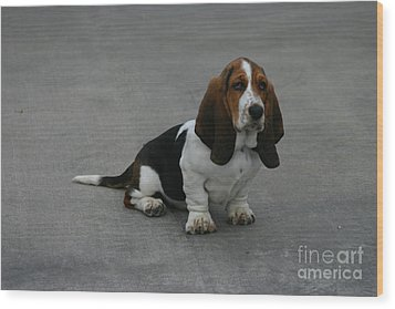 Dixie Big Paws Long Ears Wood Print by D Wallace