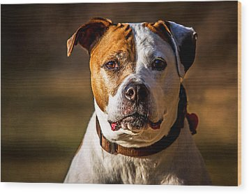 Dixie Doodle The Pit Bull Wood Print by Eleanor Abramson