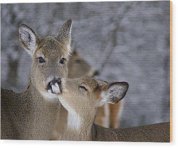 Doe And Fawn Wood Print by Larry Bohlin