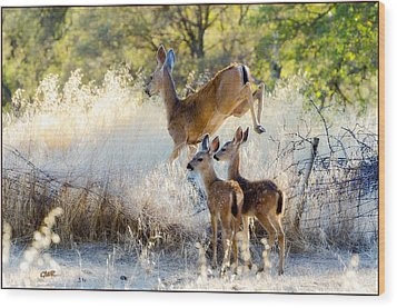 Doe And Fawns... Wood Print