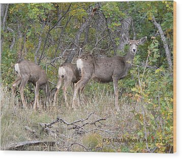 Doe And Two Fawns Wood Print