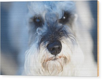 Dog 2 Wood Print by Wingsdomain Art and Photography