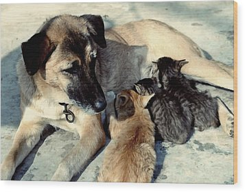 Dog Adopts Kittens Wood Print by Lanjee Chee